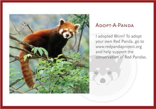 Roter Panda Bhim